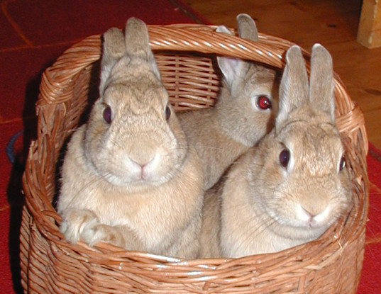 Bunnies - a sign of Spring