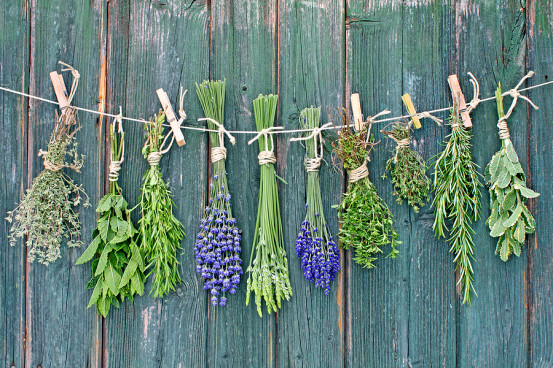 Harvest your herbs and hang them up to dry